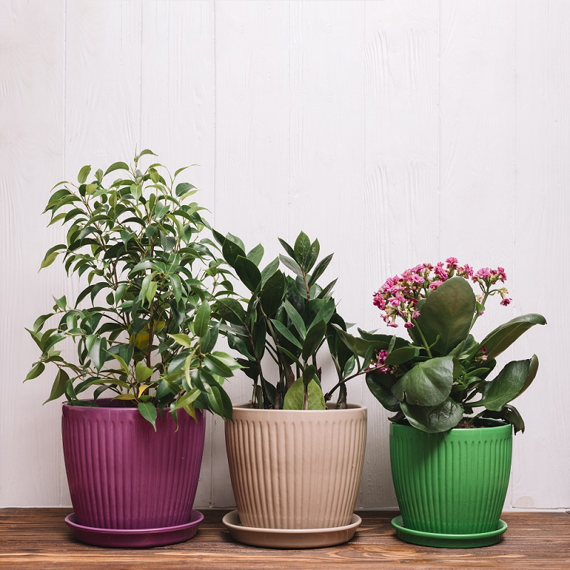 Vasos com plantas