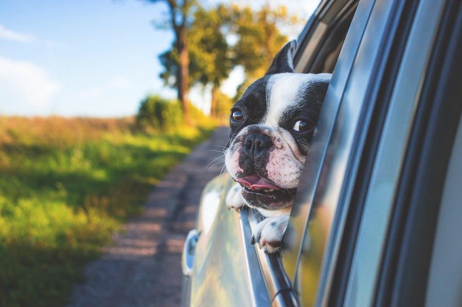 viajar com seu pet