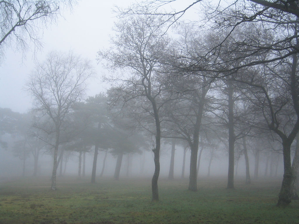 Green forest with fog on the ground
