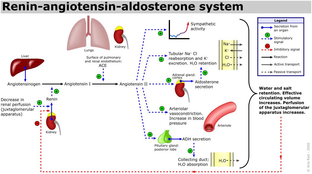 magas vérnyomás kezelése myasthenia gravis-szal