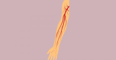Anatomia do Membro Superior: a vascularização arterial