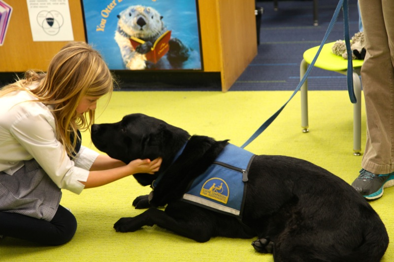 Therapy Dog20