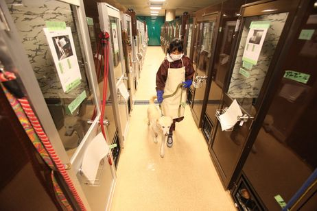 Second temp shelter opens for pets of Fukushima evacuees