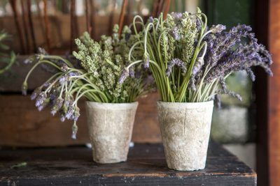 Floral Arrangements with Botany: Lavender