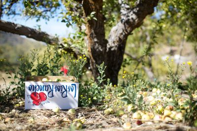 Getaway: Apple Picking at Los Rios Rancho