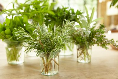 Growing and Storing Fresh Herbs
