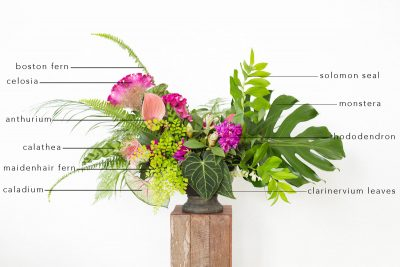 Floral Encyclopedia with Moon Canyon: A Tropical Arrangement