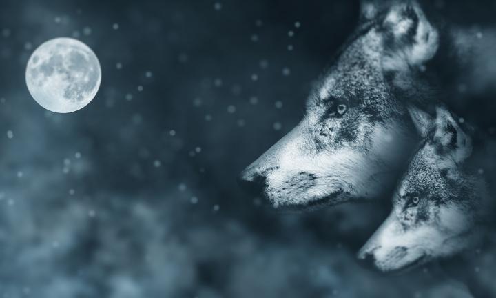 WOLF MOON RISING (ВОСХОД ЛУНЫ ВОЛКА) — ИГРОВОЙ АВТОМАТ, ИГРАТЬ В СЛОТ БЕСПЛАТНО, БЕЗ РЕГИСТРАЦИИ