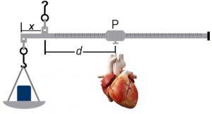 Numa balança romana, o IPK seria colocado a uma distância fixa comhecida X, e o coração, preso a um suporte P móvel, seria deslocado até uma distância d para a qual houvesse o equilíbrio horizontal da barra.