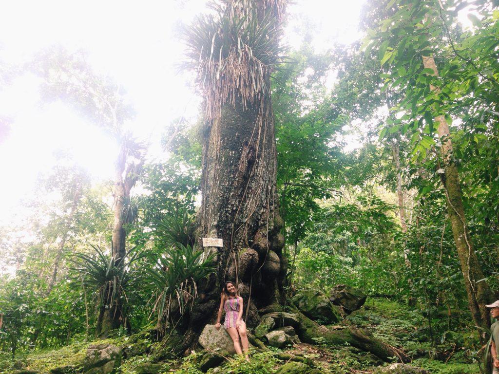 Árvore barriguda. (FOTO: arquivo pessoal)