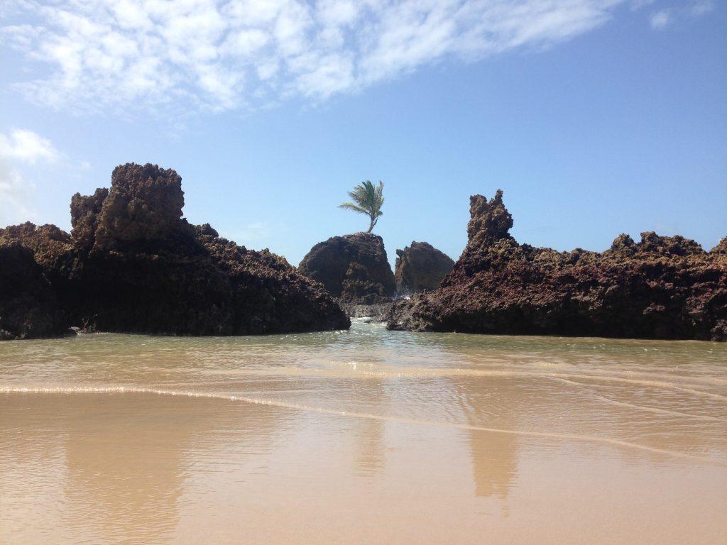 Coqueiro entre pedras é ponto turístico de Tambaba. (FOTO: Rosana Romão)