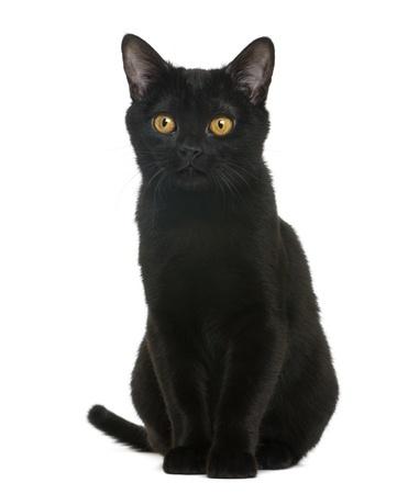 Cat Plush Uk