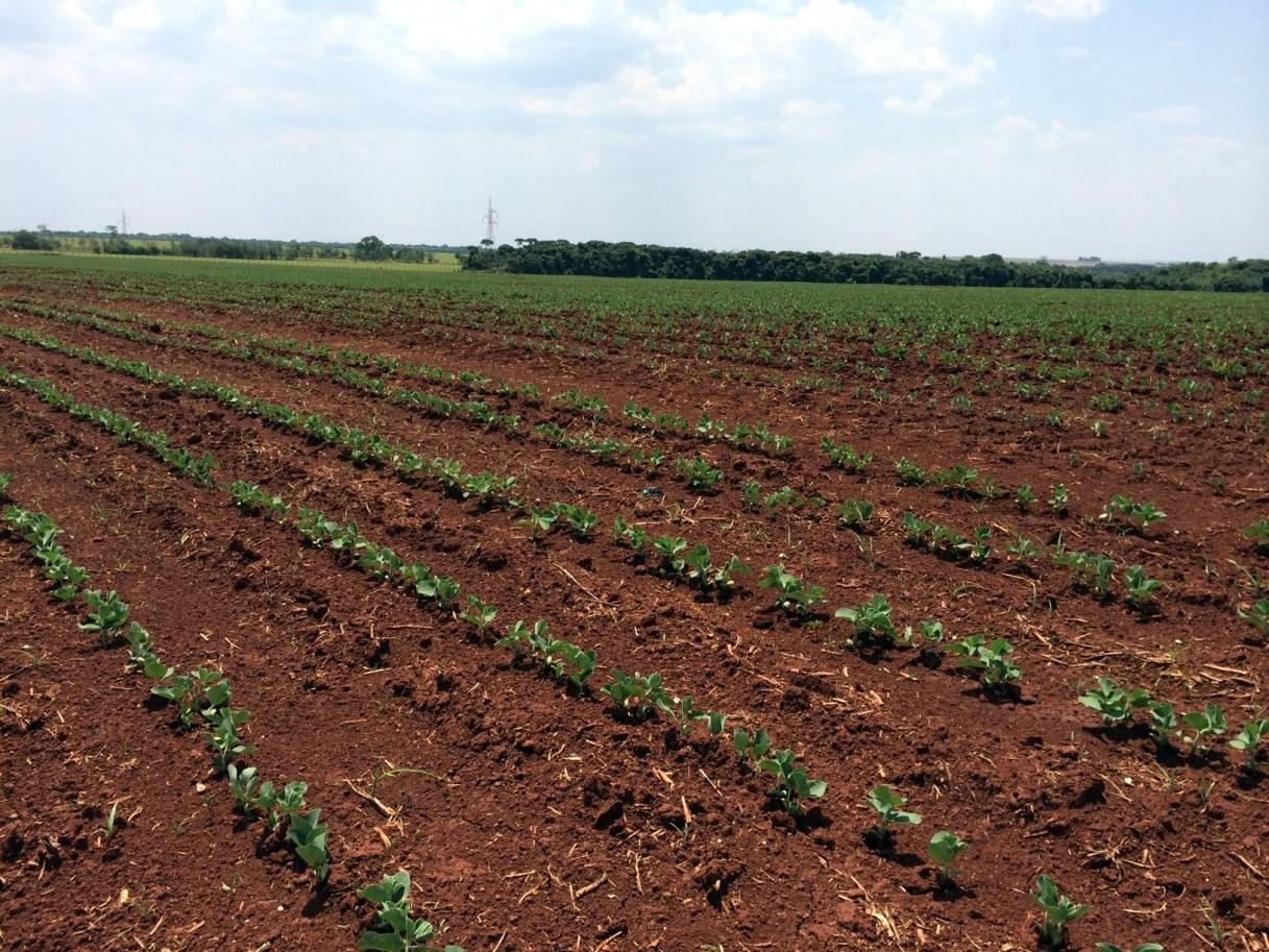 O Ceará enfrenta o quinto ano de seca. (Foto: Reprodução)