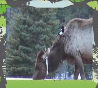 Mutualismo: a relação entre os animais (FOTO: Reprodução TV Jangadeiro)