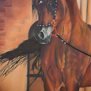 Majestic Egyptian Arabian Horse