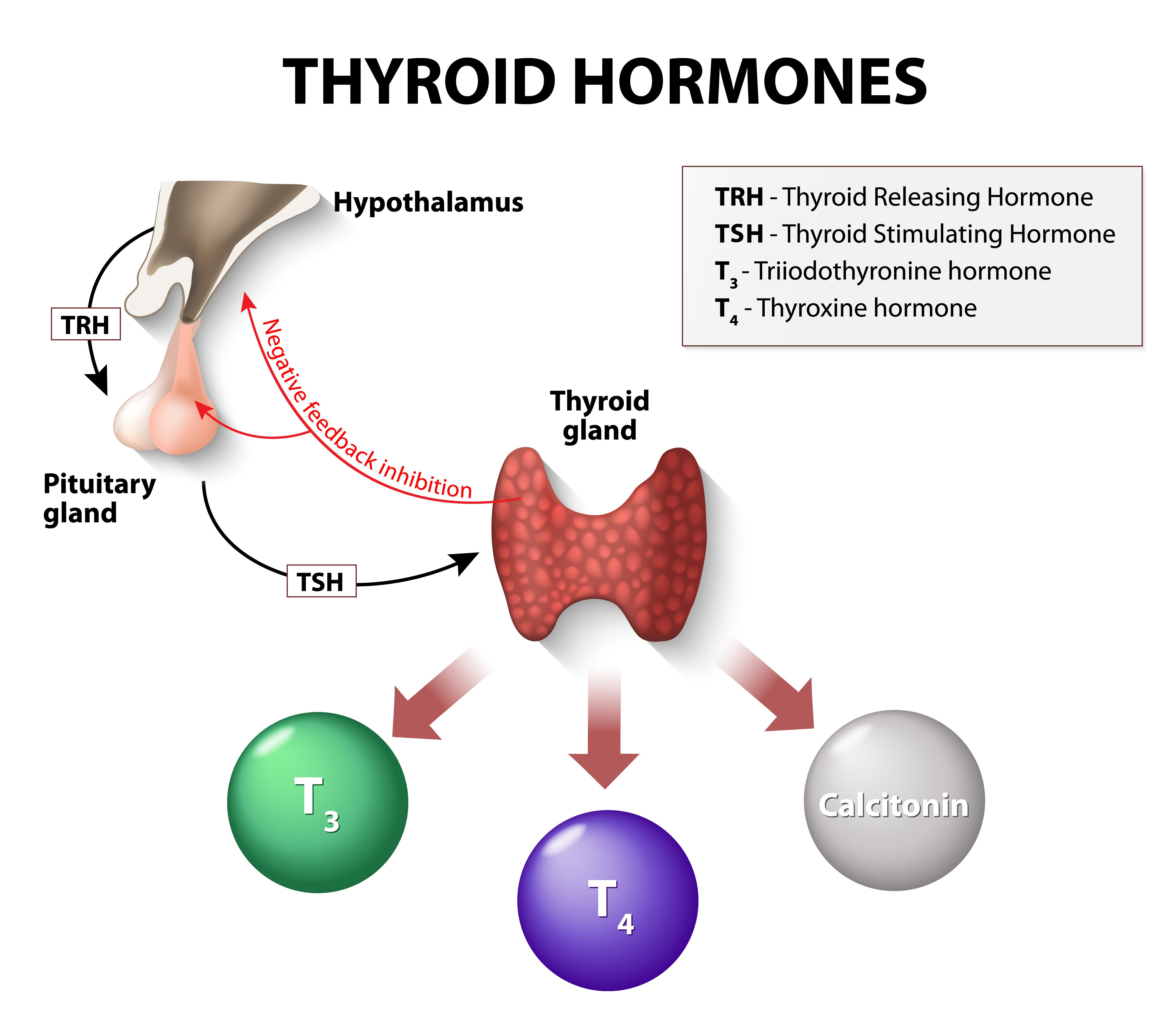 Is Your Thyroid Gland Making You Fat Jillian Michaels