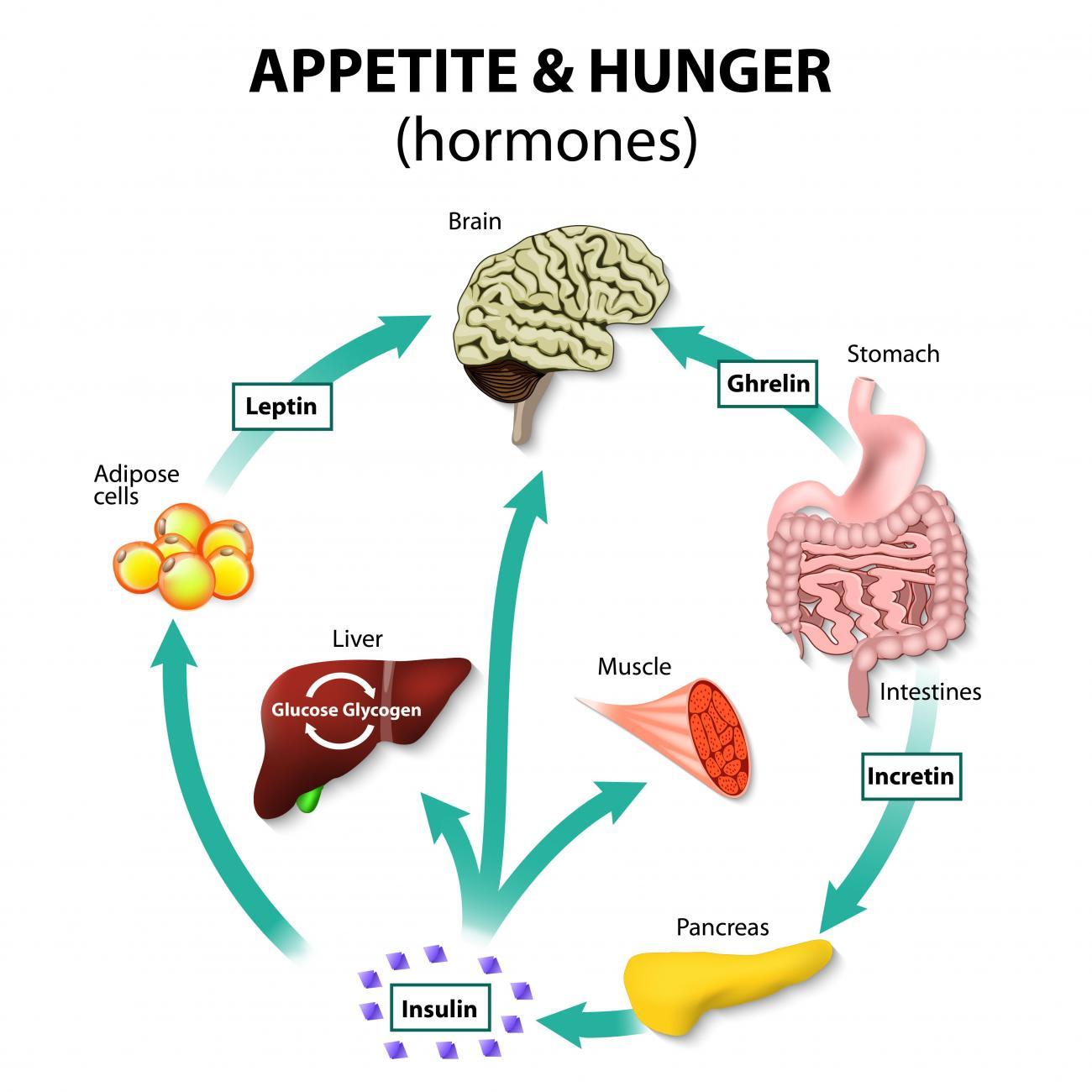 Preguntas sin respuesta sobre Menú dieta cetogénica que debe saber sobre
