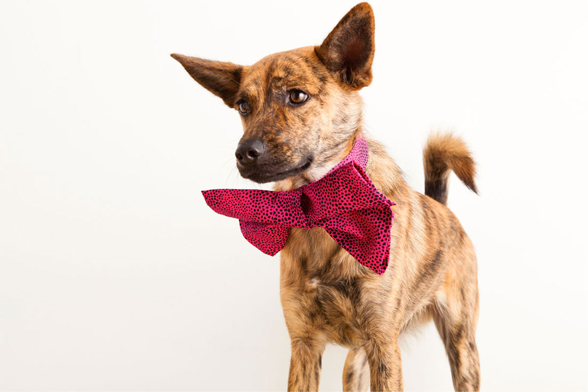 3 Dapper Duds For Your Posh Pup