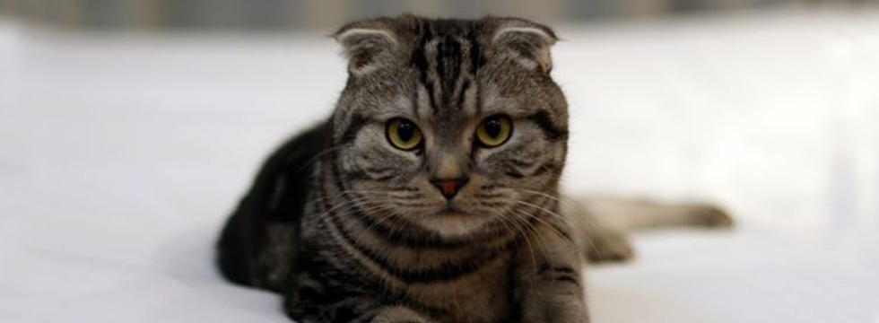 7 Cat Breeds with Un-Catlike Features