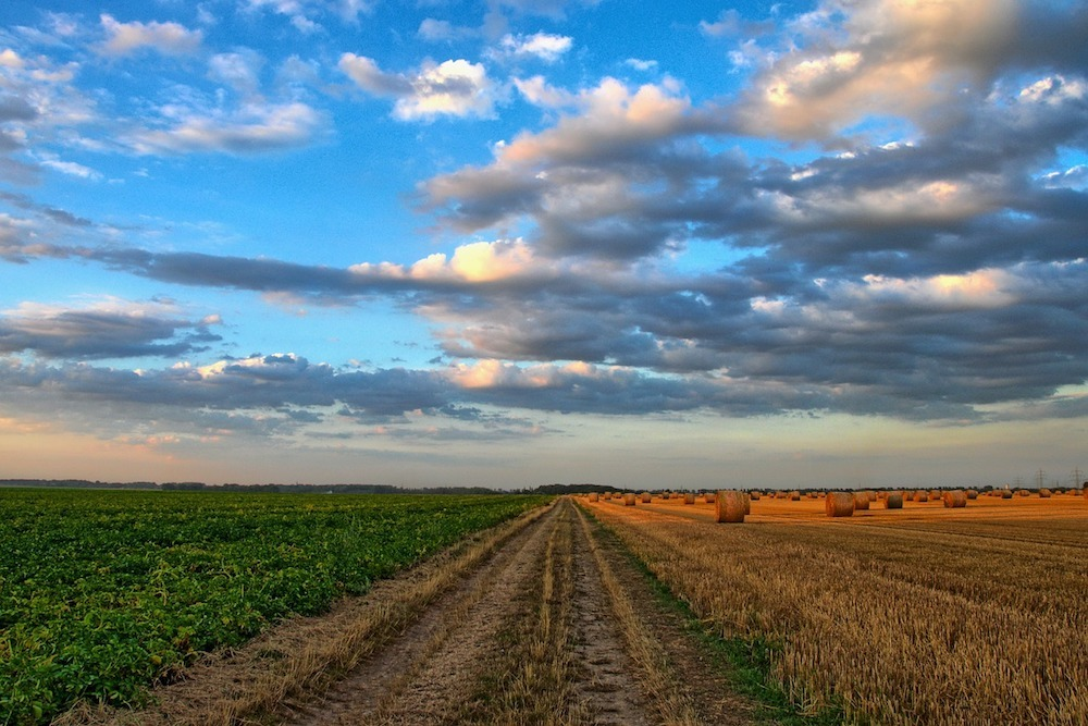There will be a push to upgrade the industries that help make Algeria's agricultural economic success a reality.