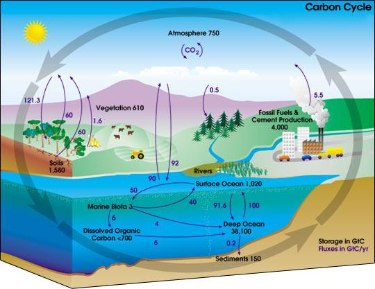 Global Carbon Cycle, NASA, Graphic, Natural Sources, Anthropogenic, Man-made, CO2, carbon dioxide, oceans, plants, biosphere.
