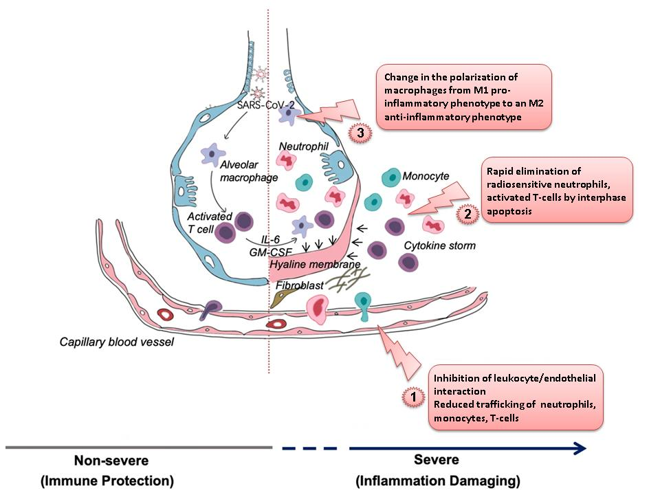 Radiation, effect on immune system. Anti-inflammatory treatment for Covid-19.