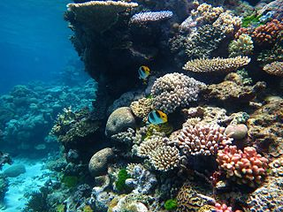 Corals, Great Barrier Reef. Photo.