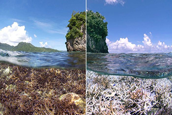 ABC, coral reef bleaching, fake photo, Samoa, Great Barrier Reef.