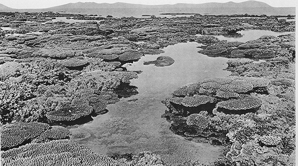 Stone Island Reef, Queensland, Photo, 1890