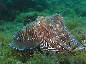 Squid, photo. MartinStr