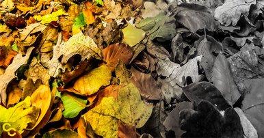 Climate change, dull autumn colors.
