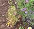Pollinator Flower Garden