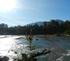 Log Jam & Salmon Habitat