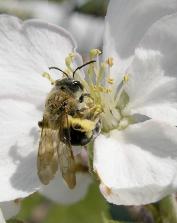 Cascadian Farm Bee