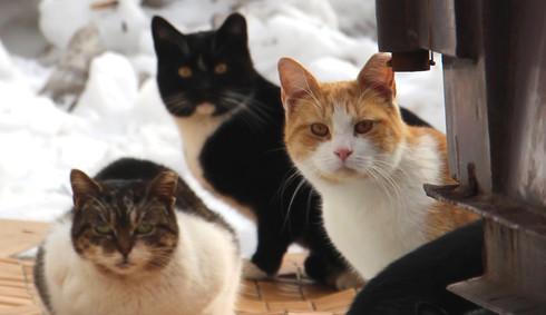 Cat Stats Feralville