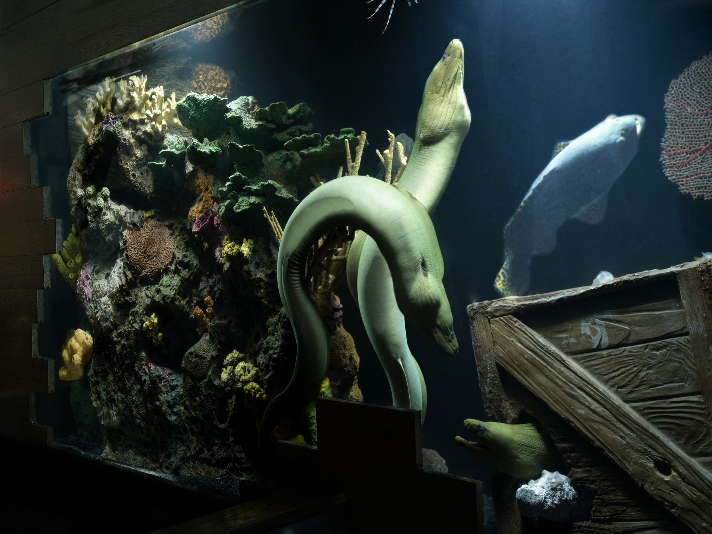 Eel reef 1a