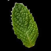 Mint 352x352