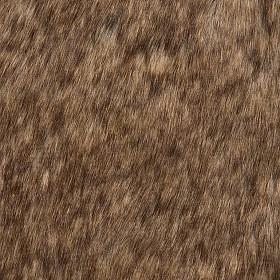 Fuzzy wuzzy masai