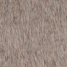 Fuzzy wuzzy possum
