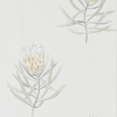 Daffodil natural