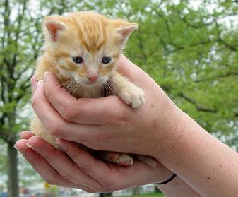 Neighborhood Cats impact, Neighborhood Cats accomplishments