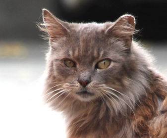 Donate to Neighborhood Cats, donation