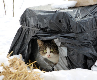 feral cat winter shelter, cat shelter