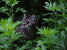 online course on TNR, course on Trap-Neuter-Return, class on TNR, class on Trap-Neuter-Return