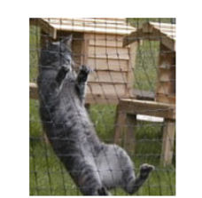 Cat-proof fencing