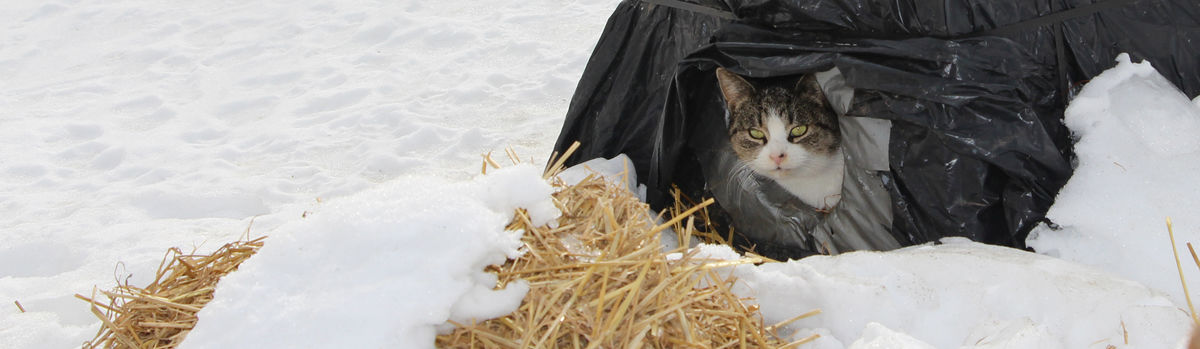 Neighborhood Cats | How to TNR | Feral Cat Winter Shelter