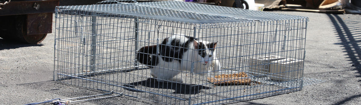 Outdoor Cat Enclosure Diy How To Build