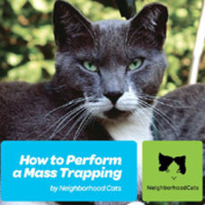 How to Perform a Mass Trapping