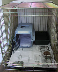 Feral Cat Setup with carrier