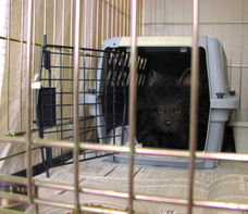 Inside the cage using a carrier